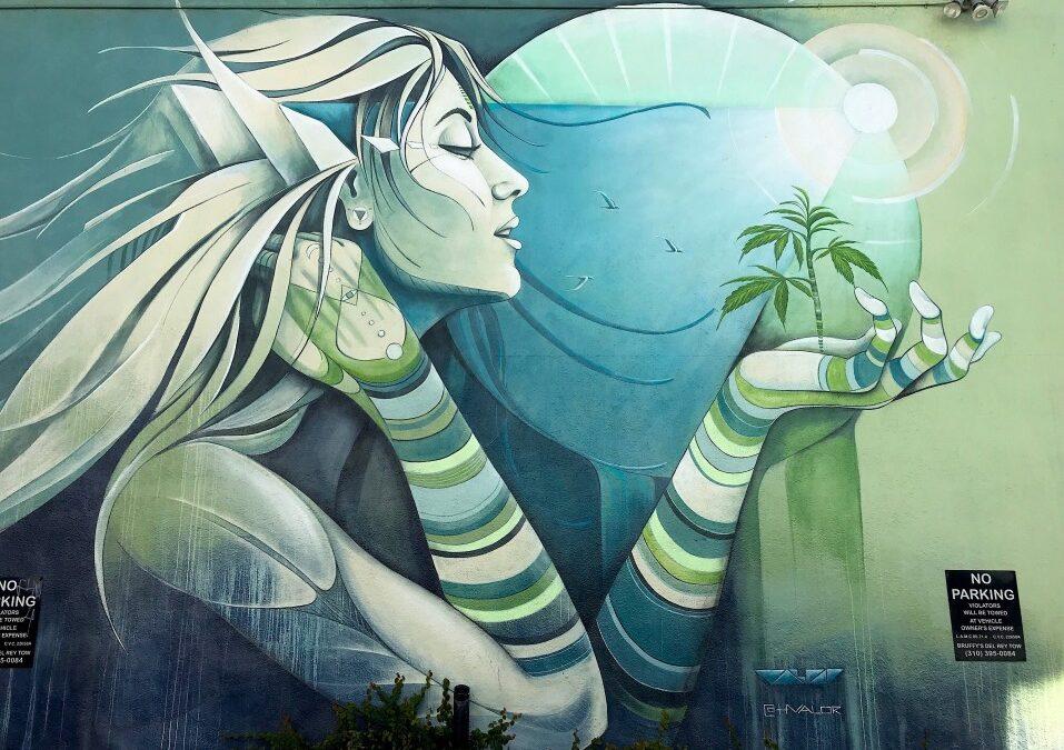 Découvrez comment les plantes peuvent améliorer votre vie et votre bien-être